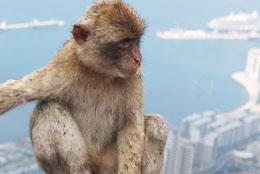 Streit um Gibraltar